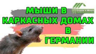 Мыши в каркасных домах в Германии. Средство от мышей. Строй и Живи.