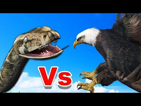 Thumbnail: LIVE: Best Attacks Of Wild Animals 2017 - #Top Craziest Wild Animal Fights Caught On Camera