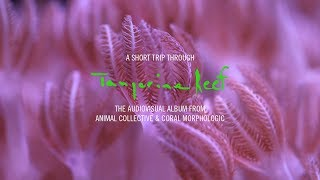 a short trip through tangerine reef the audiovisual album by animal collective coral morphologic