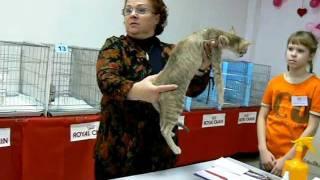 """Funny Cat Club - """"Кошачий Ля'муррр"""" в Омске 9"""