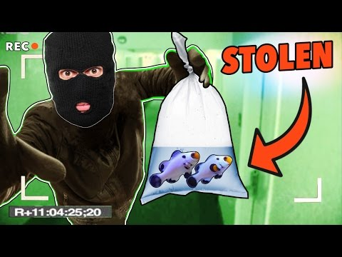 SOMEONE STOLE MY CLOWNFISH! - ($10,000 REWARD!)