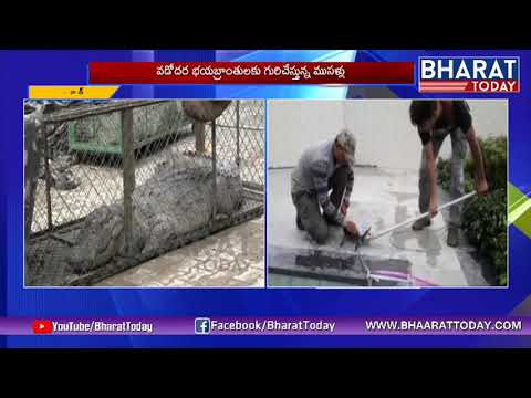 Four Crocodiles Rescued From Residential Area In Vadodara | Bharattoday