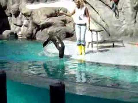 Acuario en el jardin zoologico de buenos aires youtube for Piletas en buenos aires