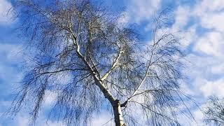 Теплый Март #весна #nature #временагода #небо #природа #Spring