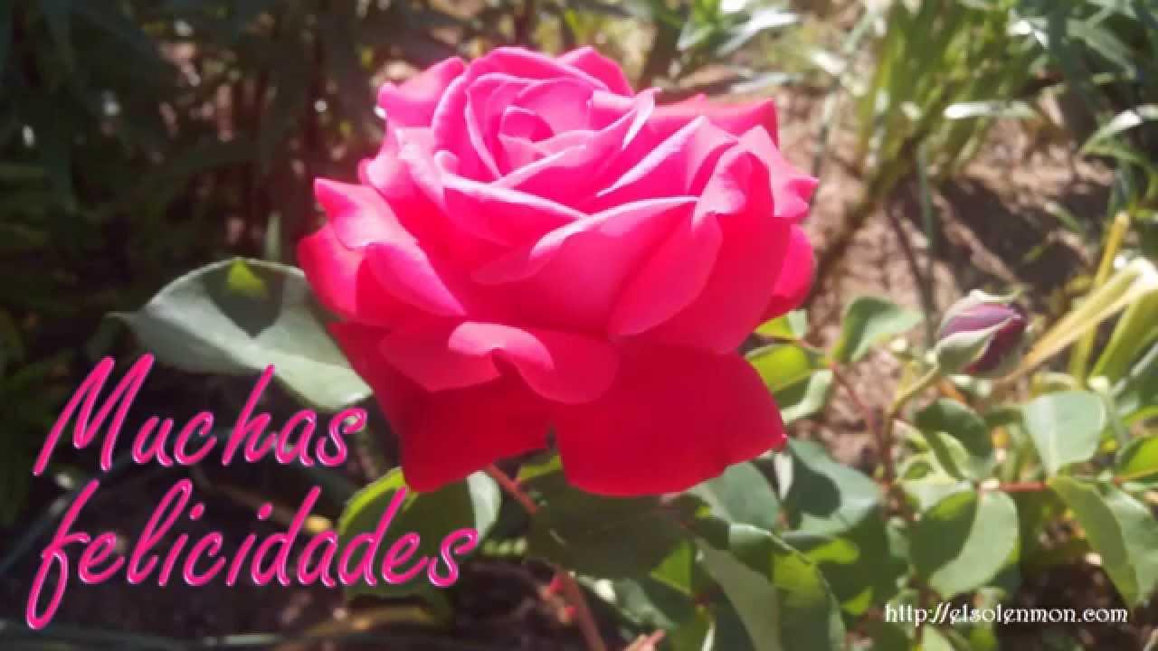 Felicitaciones De Santos Y Cumpleanos.Felicitacion De Santo 25 Youtube
