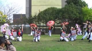 お茶ノ子祭々 テクノフェスタin浜松 演舞動画(夢咲わぎ)