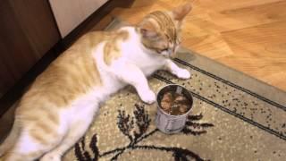 Реакция кота на тушенку 18+