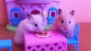 """Сказка про хомяков """"Пицца для брата"""". Мультик про хомячков - новая серия - хомки Соня и Маршал."""