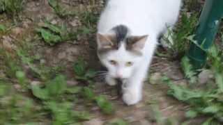 Кошка ловит мышь
