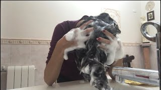 ASMR- shampoo
