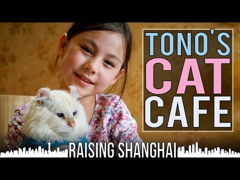 TONO'S CAT CAFE | RAISING SHANGHAI