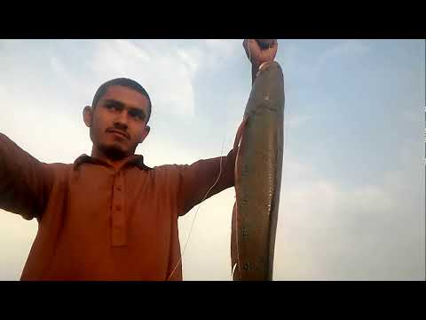 Fishing for snakehead........ Snakehead fishing in Pakistan