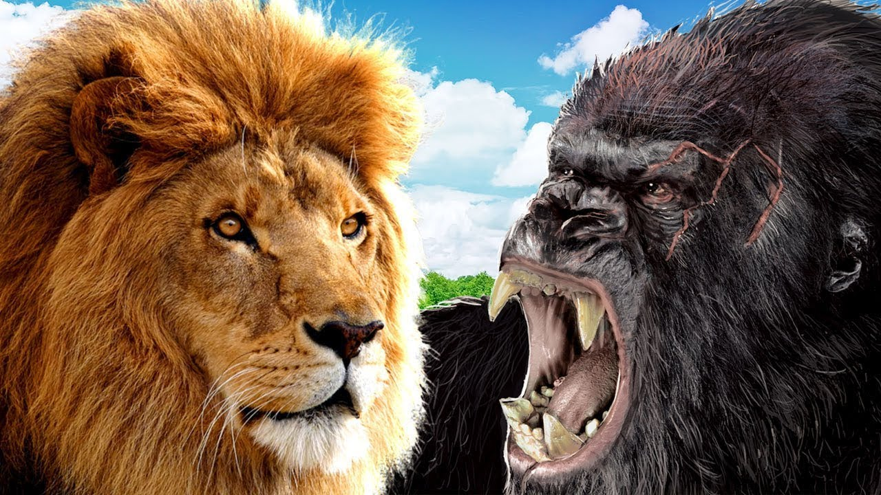 Горилла против льва. Кто сильнее?