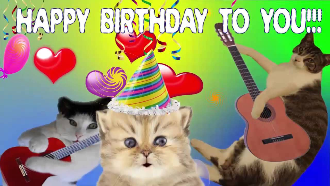 Happy Birthday To You Song By Cute Singing Cats