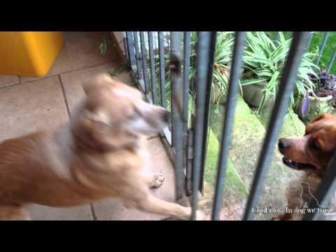 Addestramento del cane, attivazione mentale