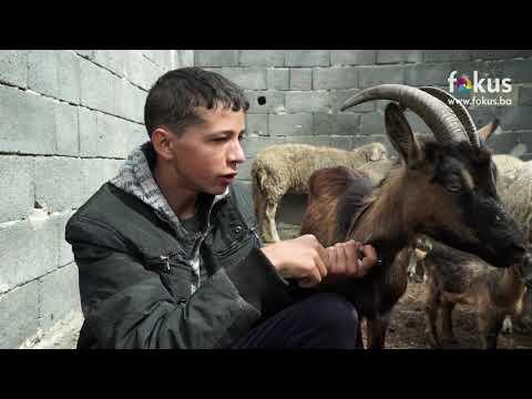 Kako danas živi dječak Jasmin koji je umjesto bicikla želio kozu (VERZIJA s urednim TONOM)