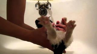 How to Wash a Kitten / How to Give a Kitten a Bath