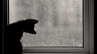 Llueve a Cantaros De Amigos