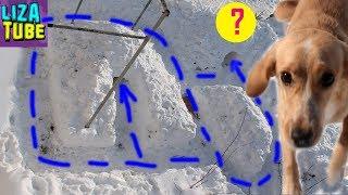 ЛАБИРИНТ ИЗ СНЕГА И ПОЛОСА ПРЕПЯТСТВИЙ Таффи проходит  снежный лабиринт LizaTube