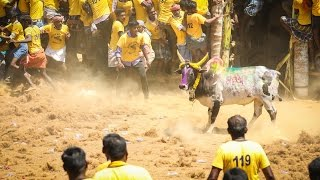 Singarayapuram Jallikattu Full Video - 2017