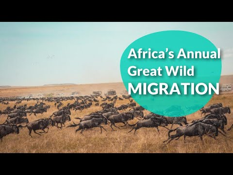 Africa's Annual Great Wild Migration  | Tripaneer