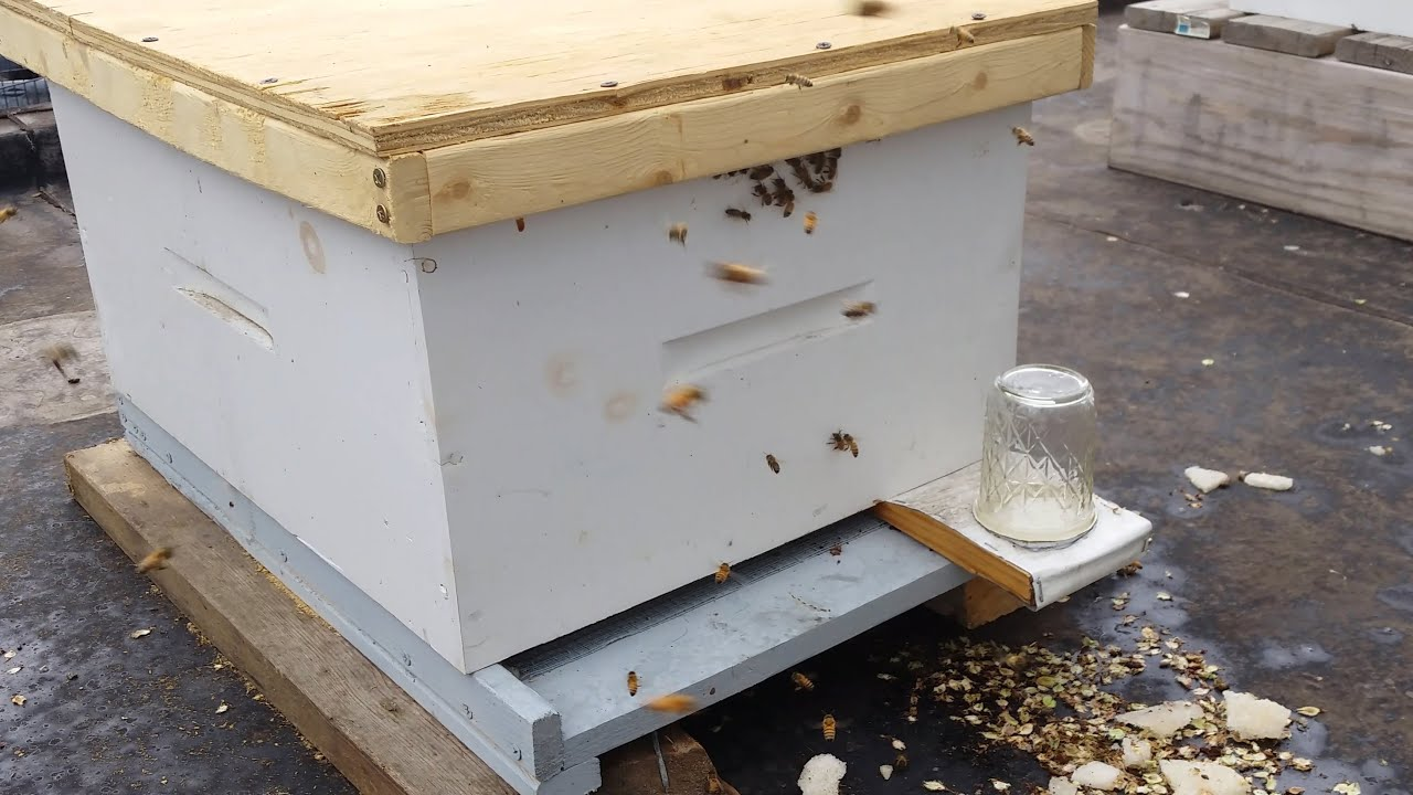 Russian Honey Bees vs Italian Honey Bees-My First package ... - photo#9