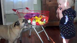 Laughing Baby, Howling Pug, and a Harmonica