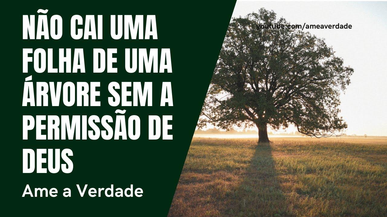 Não Cai Uma Folha De Uma árvore Sem A Permissão De Deus Não Está Na