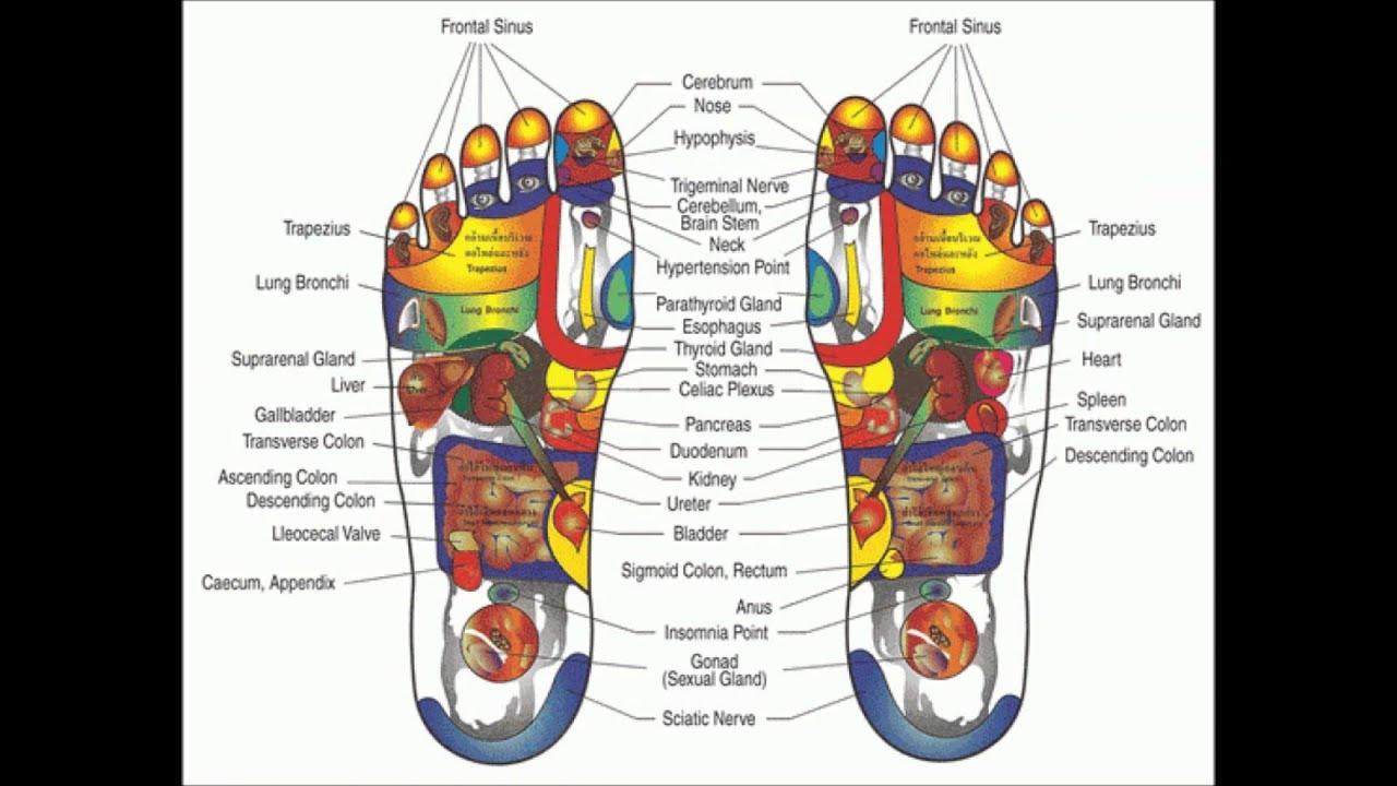 foot reflexology map for beginners (). foot reflexology map for beginners ()  youtube