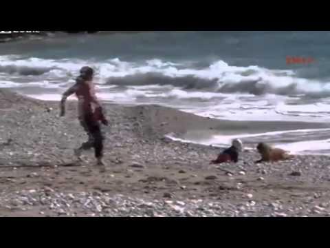 Cachorro salvó a bebe en playa de Turquía