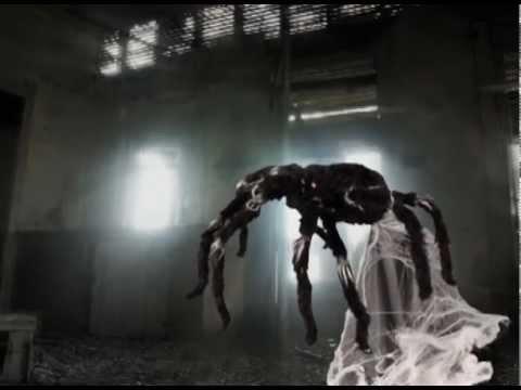 jumping spider spirit halloween
