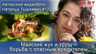 Майский жук и хрущ - борьба с опасным вредителем