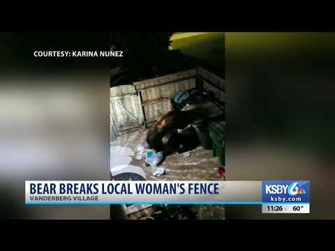 Woman captures bear rummaging through her trash in Vandenberg Village