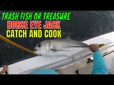 HORSE EYE JACK Trash Fish Or Treasure.. CATCH AND COOK