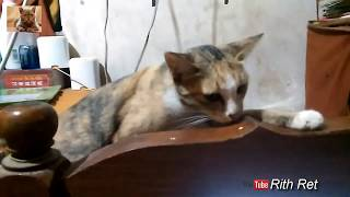 sleeping cat quotes funny