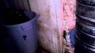 Уничтожение тараканов(, 2013-04-23T08:05:01.000Z)