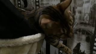 Кот спит в гамаке 😽 💤 😸