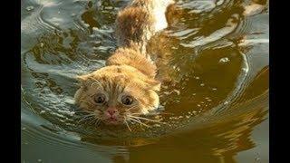 Кошки в вода))) СМЕШНОЕ - Cats in the water))) Funny