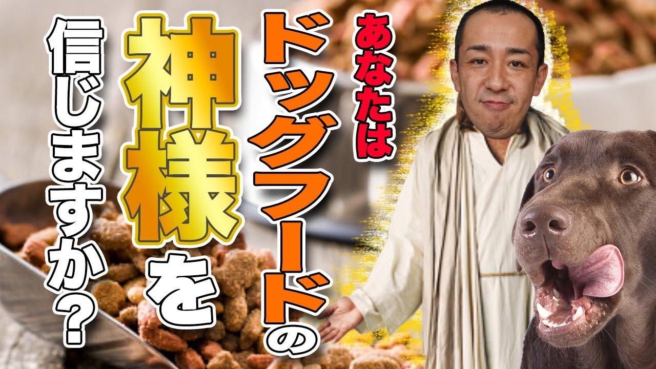 ドッグフード の 神様