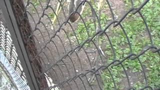 Японский журавль,зоосад