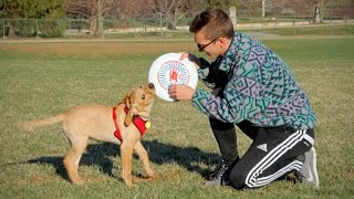 Frisbee Puppy Play Date