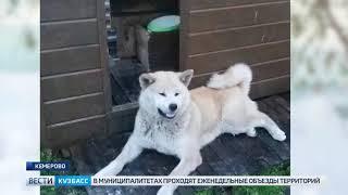 Кемеровчанин сдает в аренду свою собаку за миллион рублей