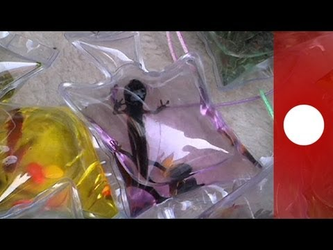 China: live turtles in bags sold as key rings