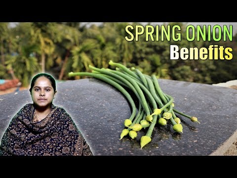spring-onion-is-as-good-as-regular-onion-know-its-role-for-the-human-body