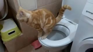 Приучение кота к унитазу Ура заработало!!!
