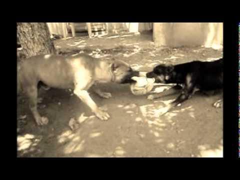 Perros Cartel De Santa Youtube