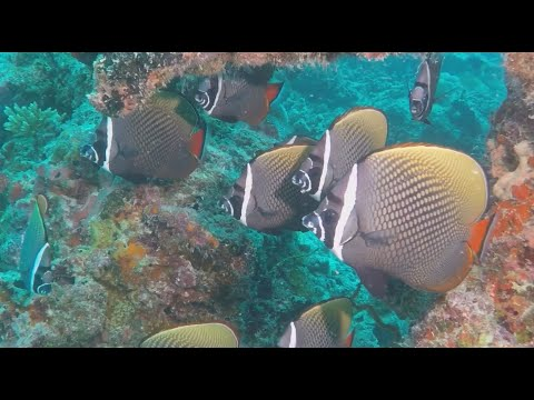 DIVING IN THE INDIAN OCEAN A 90 MINUTE UNDERWATER RELAXATION VIDEO