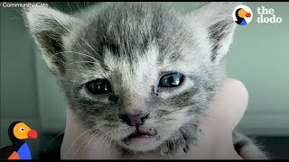 Kittens Trapped in Bulldozer Rescued by Men Who Dismantle Machine | The Dodo