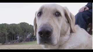 It's A Dog's Life At Technion - Seeing Eye Guide Dogs And Puppies On Campus