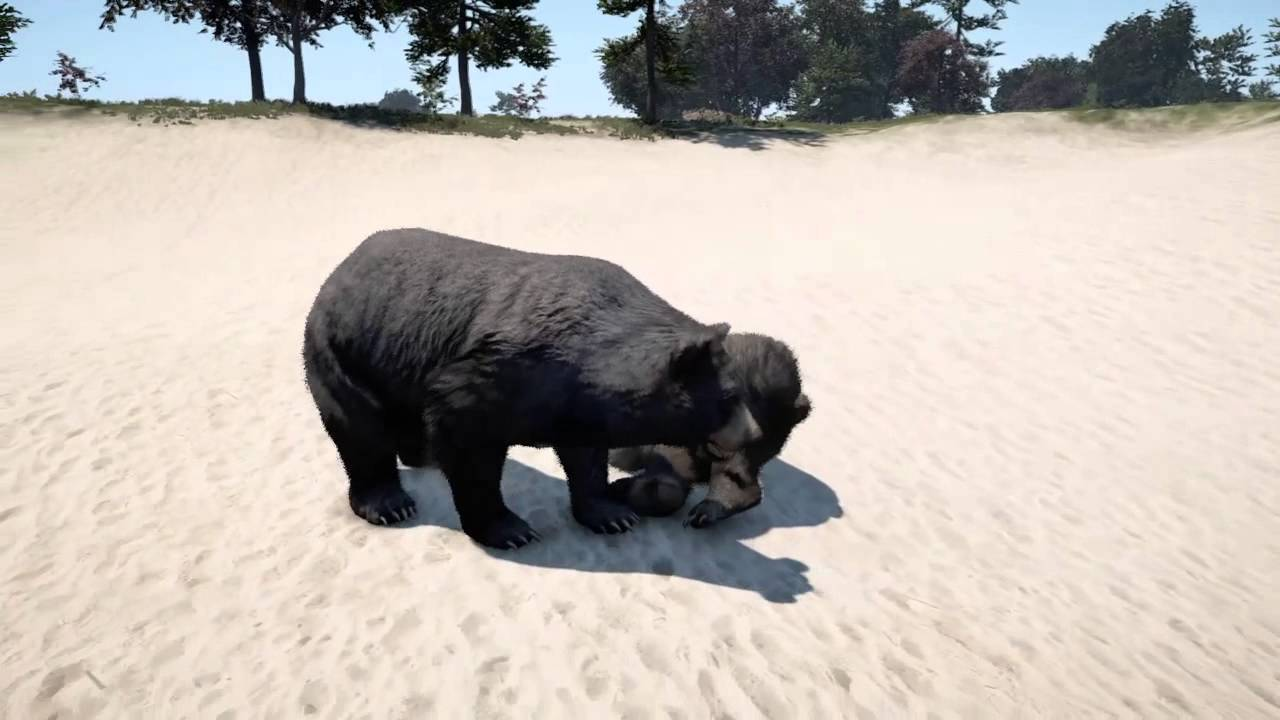 Far Cry 4 Animal Fights PS4